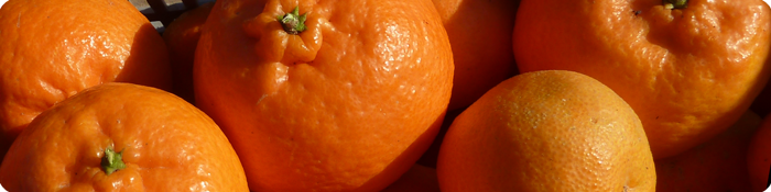 Mandarines_Inici_Pagina_700