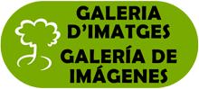 BOTO_GALERIA_IMATGES_VERD_220