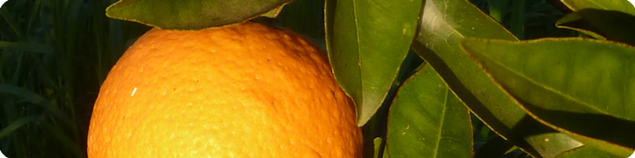 Taronja_Inici_Pagina_700